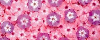 Tumblr Flower Backgrounds wallpaper 1920x1200 23676