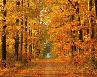 beautiful autumn wallpapers autumn wallpaper fall wallpaper 1600x900