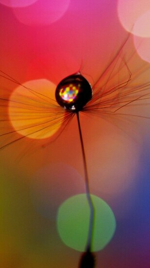 Wallpaper 720x1280 dandelion drop multicolored spots Samsung