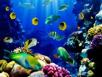 Live Aquarium Wallpaper PicsWallpapercom