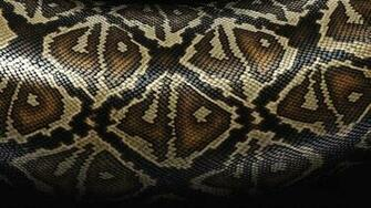 Snake Skin Background 7022053