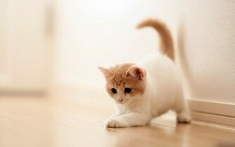 Cat Wallpapers HD Pictures One HD Wallpaper Pictures Backgrounds