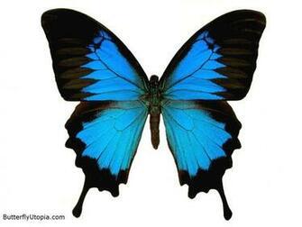 Blue Butterfly Wallpaper 10467 Hd Wallpapers in Cute   Imagescicom