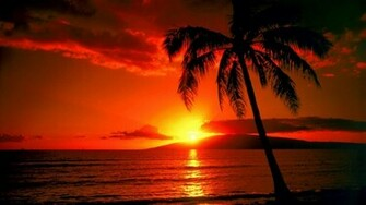 Download Palm Tree Sunset Wallpaper pictures in high definition or