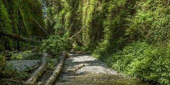 See Tall Trees at Redwoods State and National Parks