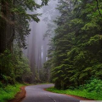 Redwood National Park California 4K HD Desktop Wallpaper for