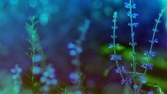 Best HD Spring Flower Theme Wallpapers Blue Background