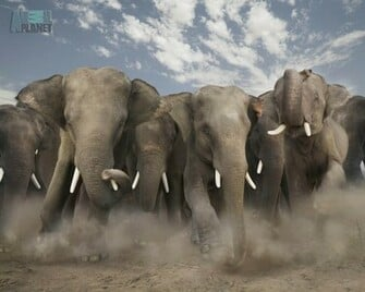 Animal Planet Wallpaper Download   elephan