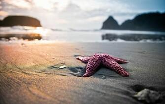 from beach themed wallpaper wallpaper beach themed wallpaper
