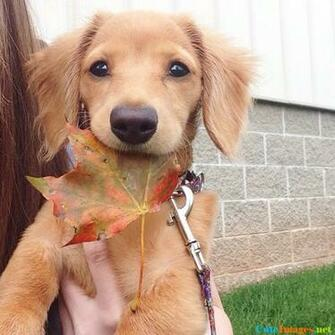 Happy first day of fall wallpaper   CuteImagesnet