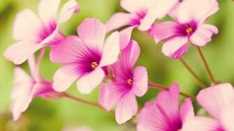Spring Flower wallpaper   702489