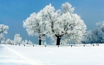Snow covered winter nature HD Desktop Wallpaper HD Desktop Wallpaper