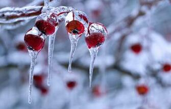 hd wallpapers 2012 winter nature photography