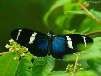 Blue Butterfly Wallpaper 10181 Hd Wallpapers in Cute   Imagescicom
