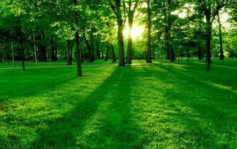 HD wallpaper Green Nature Wallpapers for Desktop Backgroundsjpeg