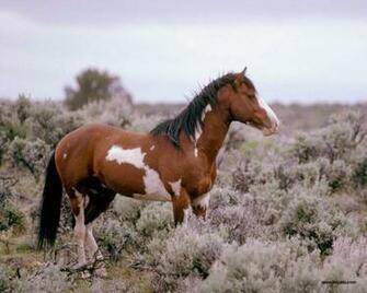 HD Animals Wallpapers Horses Wallpapers for Desktop