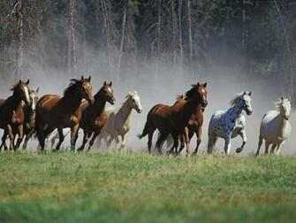 Wild Horses HD Wallpapers Wild Horses HD Wallpapers Check out the