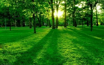 Green Nature HD Wallpapers Green Nature HD Wallpapers Check out the