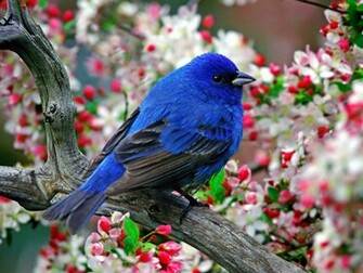 Most Beautiful Birds Desktop Widescreen Wallpapers Widescreen