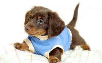 wallpapers desktop puppies puppy animals 1920x1200