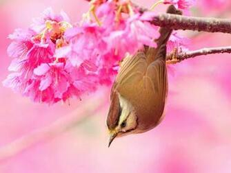 download bird and flower wallpaper which is under the birds wallpapers