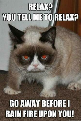 grumpy cat funny pictures   Dump A Day