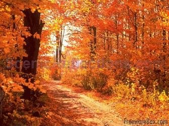 Colors of Autumn Screensaver freeware screenshot   Screensavers