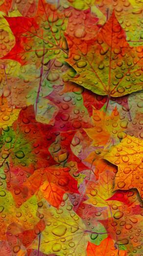 Fall   Hd Fall Leaves Wallpaper For Iphone 128162   HD