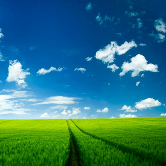 Green Field Ipad Wallpaper iPad Retina HD Wallpapers