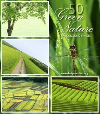 green nature wallpaper background