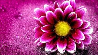 Flower Wallpaper Full Hd