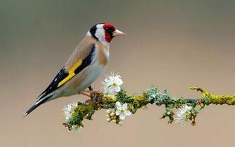 Bird On Flower Branch 2560x1600 6606 HD Wallpaper Res 2560x1600