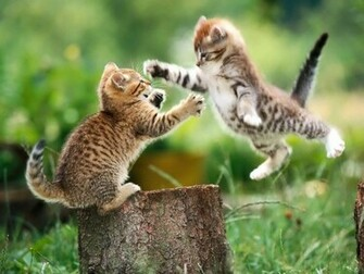 Funny Cat Wallpapers For Desktop 2012 Funny World