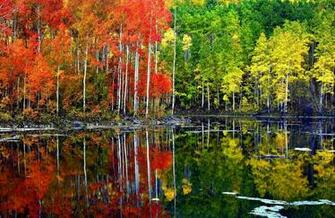Aspen Tree Wallpaper HD for Download