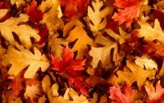 autumn leaves background wallpaper images 1920x1200