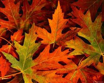 desktop wallpaper fall foliage   wwwwallpapers in hdcom