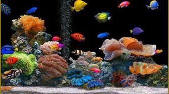 Animated Desktop Wallpaper Fish for Windows 81