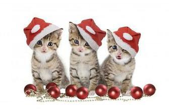 Christmas Cats wallpaper   ForWallpapercom