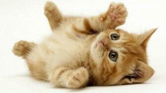 cute cats wallpaper 2 filesize x1024 wallpaper backgrounds 1280 1024
