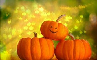 Pumpkin Wallpapers Backgrounds Photos Images andPictures for