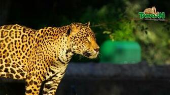 Zoolgico Tamatn Gobierno del Estado de Tamaulipas