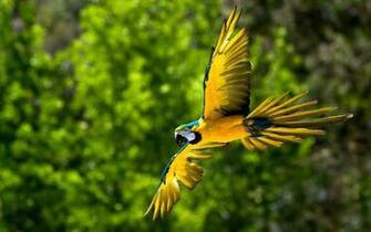 Desktop Wallpapers Backgrounds 10 Beautiful Birds Desktop