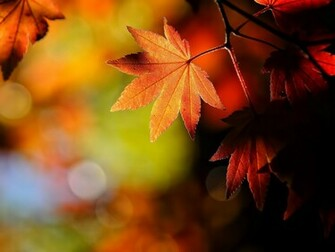 Autumn Wallpapers Backgrounds PhotosImages and Pictures for