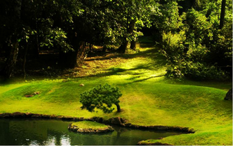 Download Natural Wallpaper Background Green Nature