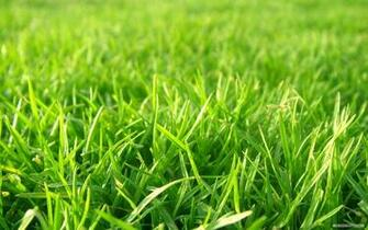 wallpaper nature grass football pitches background