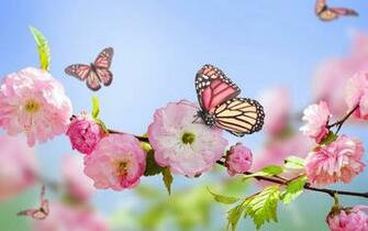 Flowers and butterflies wallpaper   SF Wallpaper