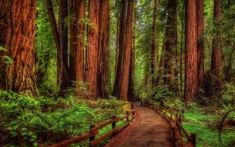 Redwood Forest Wallpapers   Top Redwood Forest Backgrounds
