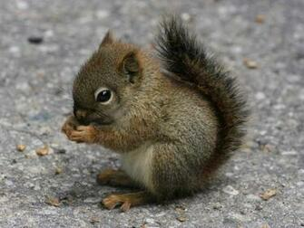 Desktop Wallpapers Baby Squirrel Cute Animal Wallpaper   iWallScreen