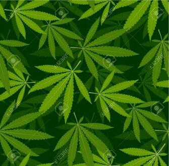 Marijuana Leaves Seamless Vector Pattern Cannabis Plant Brue