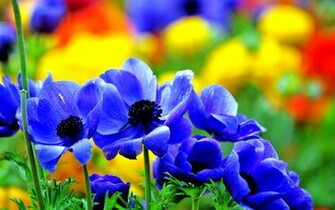 Desktop Backgrounds Flowers